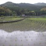 Hiwasa rizière