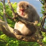 Arashi - singe