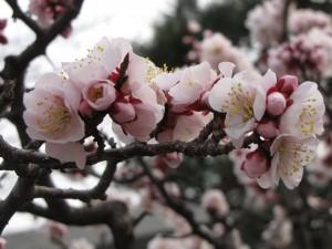 Sakura - 02