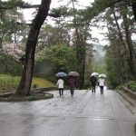 Izumo Taisha - on the way to the gods